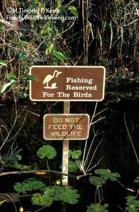 Flamingo marina everglades national park for Does walmart sell fishing license