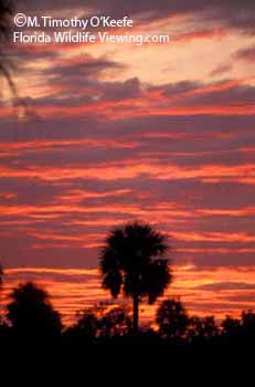 Everglades National Park Sunset photo ©M Timothy O'Keefe   www.FloridaWildlifeViewing.com